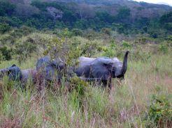 000 éléphants - Copie