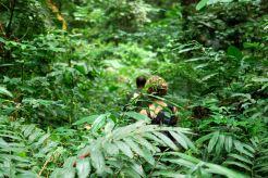007 en forêt