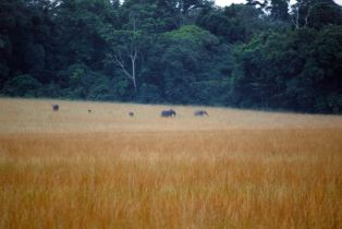 032 éléphants