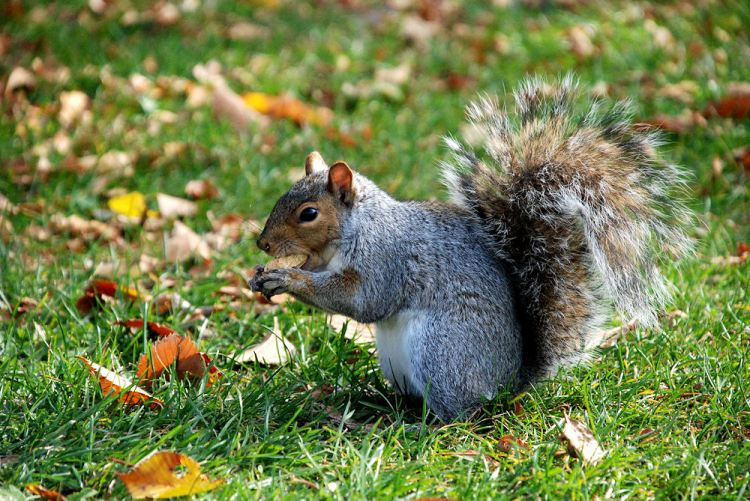 05 ecureuil graine