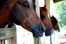 105 chevaux