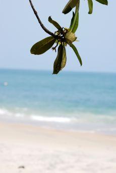 129 branche et plage