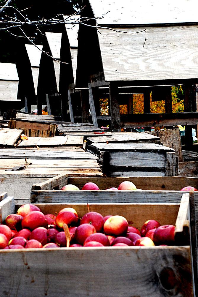 16 pommes mt st hilaire