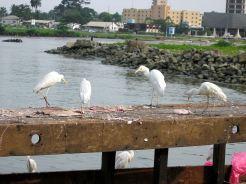 272 oiseaux blcs