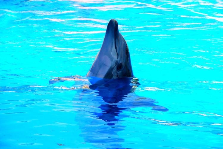 39 dauphin