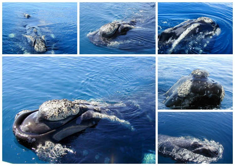 Baleines 11
