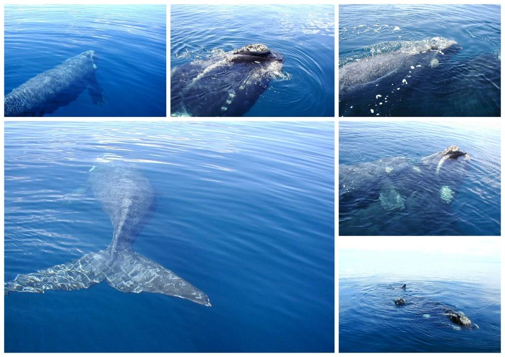 Baleines 12